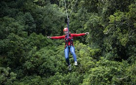 Forest Ziplining Canopy Tour