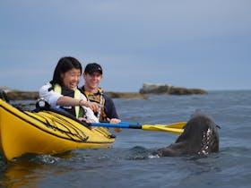 Guided Seal Kayaking