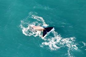 Whale Watching Flight